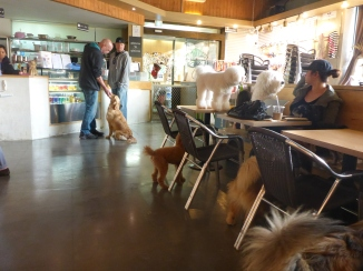 Dogs on tables