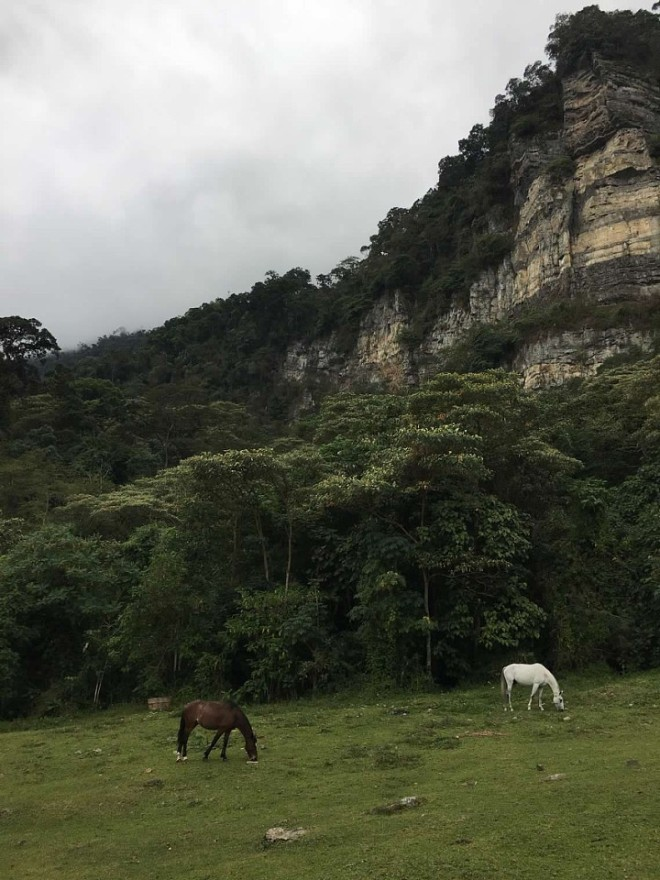 20 horses
